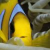 Abren el primer hotel del mundo para peces domésticos