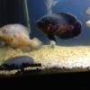 Fotos del acuario de Sergio