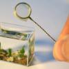 La pecera más pequeña del mundo