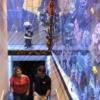 Proyecto y contrucción de Acuario entre Go Fish Aquariums Weldben