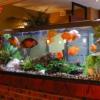 Feng Shui: Aumenta la armonía con un acuario